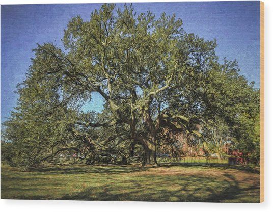 Emancipation Oak Tree Wood Print
