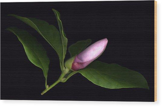 Emerging Magnolia Wood Print by Deborah J Humphries