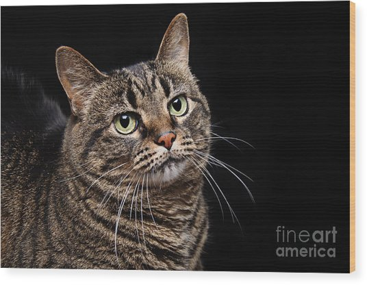 Emmy The Cat Ponder Wood Print