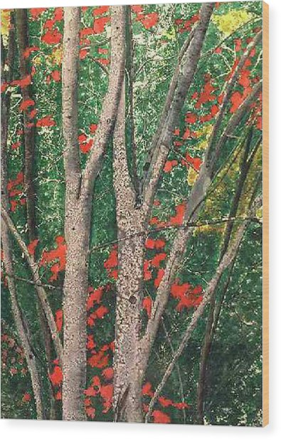 Enchanted Birches Wood Print