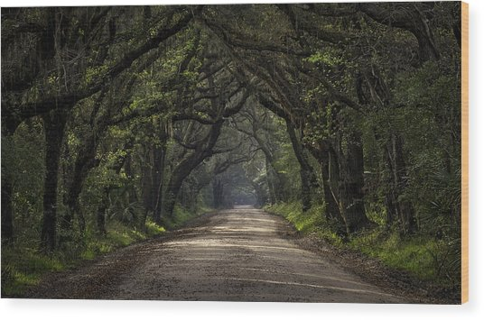 Enchanted Wood Print by Michael Donahue