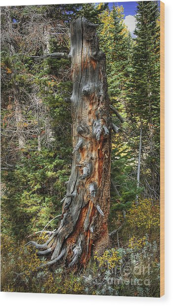 Enchanted Tree Wood Print