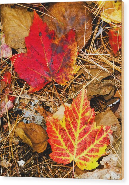End Of Fall Wood Print by Bob Bailey