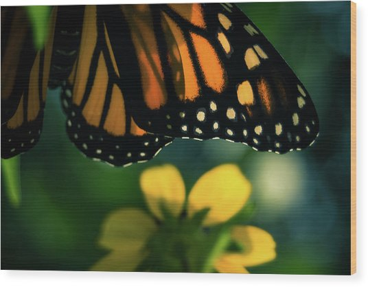 End Of Summer Monarch Wood Print