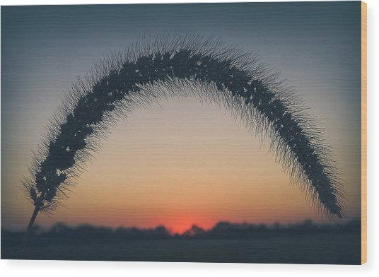 Wood Print featuring the photograph End Of The Day by Viviana  Nadowski