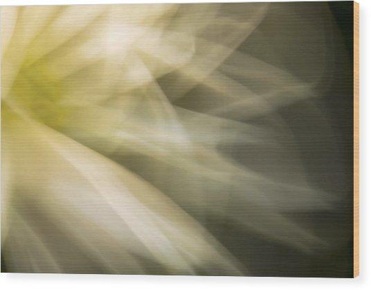 Energetic Coneflower  Wood Print