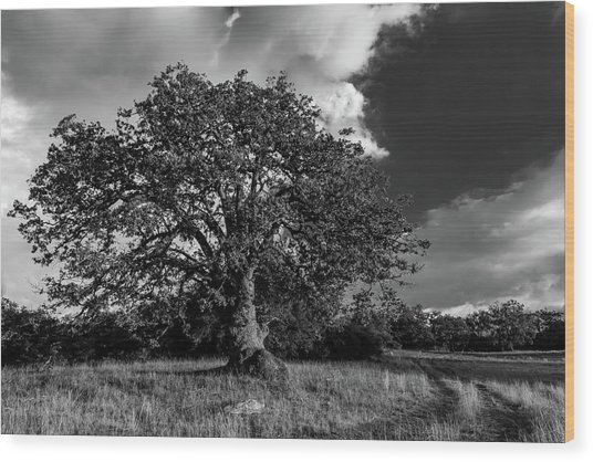 Engellman Oak Palomar Black And White Wood Print