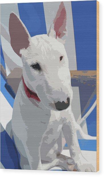 English Bull Terrier Wood Print