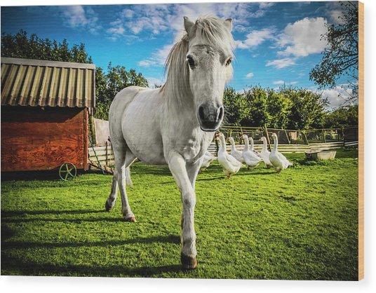 English Gypsy Horse Wood Print