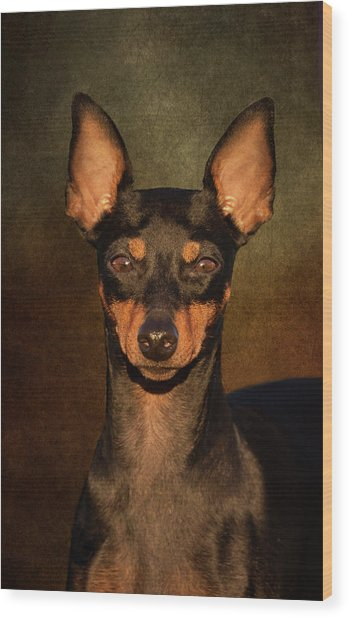 English Toy Terrier Wood Print