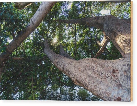 Enjoying Nature Wood Print by Andrea Mazzocchetti