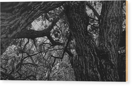 Enter The Woods In Black And White Wood Print