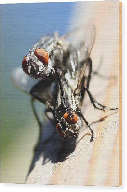 Entomologists Discover Why People Want To Be A Fly On The Wall Wood Print by Wingsdomain Art and Photography