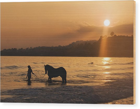 Equine Beach Time Wood Print by Nick Sokoloff
