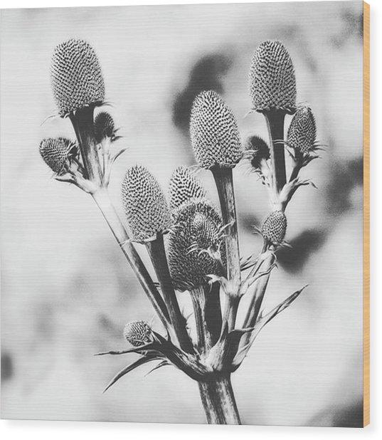 Eryngium #flower #flowers Wood Print