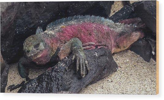 Espanola Marine Iguana Wood Print by Harry Strharsky