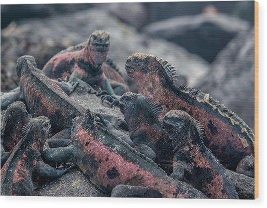 Espanola Marine Iguanas Wood Print by Harry Strharsky