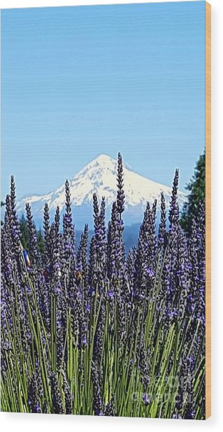 Essence Of Lavender Wood Print