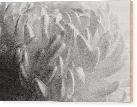Ethereal Chrysanthemum Wood Print