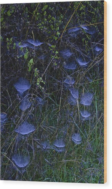 Wood Print featuring the photograph Spider Webs by Sherri Meyer
