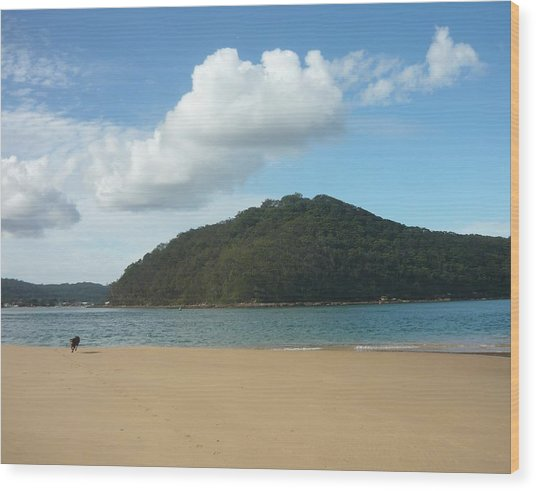 Ettalong Beach Wood Print by Adrianne Wood