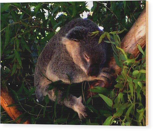 Eucalyptus Daze Wood Print by Douglas Kriezel