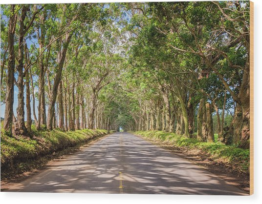 Eucalyptus Tree Tunnel - Kauai Hawaii Wood Print