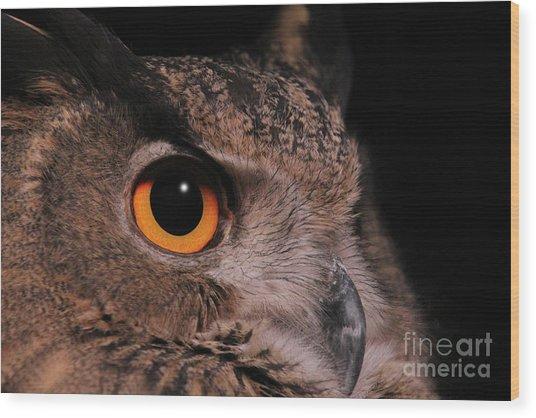 Eurasian Eagle-owl #3 Wood Print