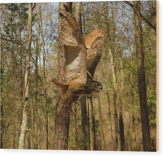 Eurasian Eagle Owl In Flight Wood Print