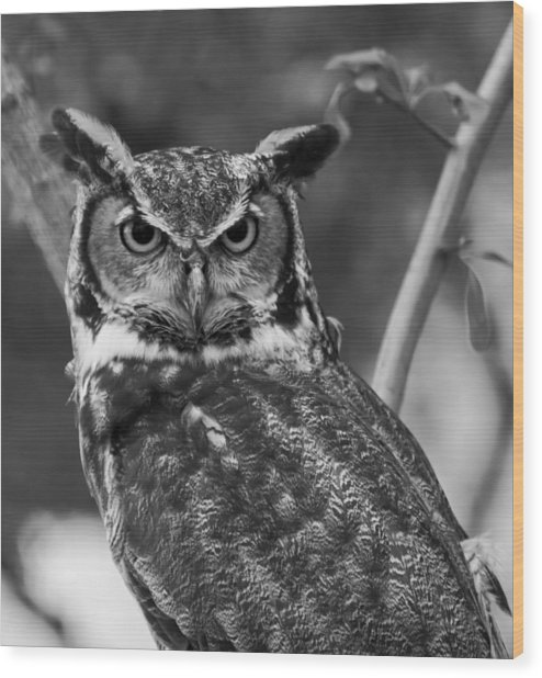 Eurasian Eagle Owl Monochrome Wood Print