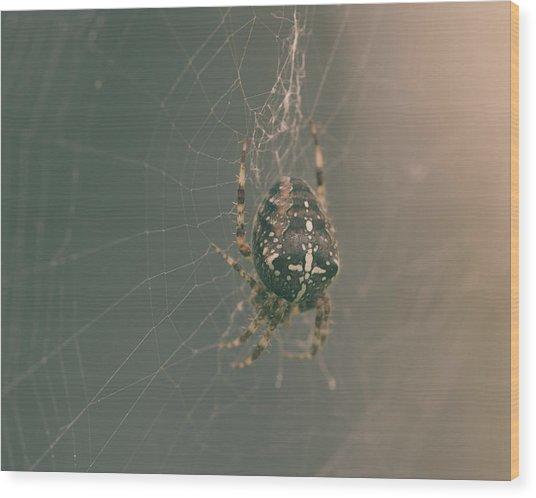 European Garden Spider B Wood Print