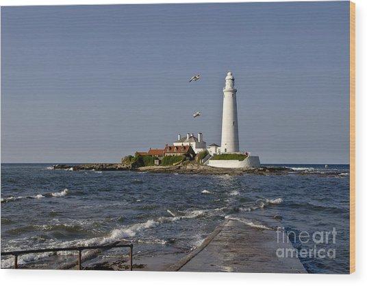 Evening At St. Mary's Lighthouse Wood Print