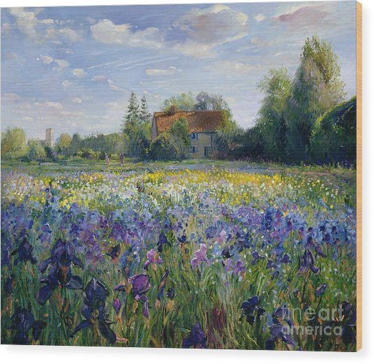 Evening At The Iris Field Wood Print