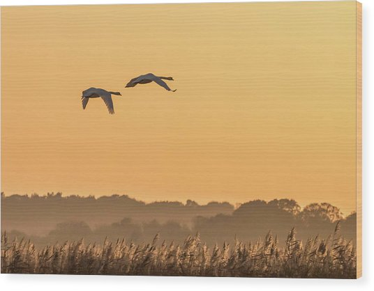 Evening Flight Home Wood Print