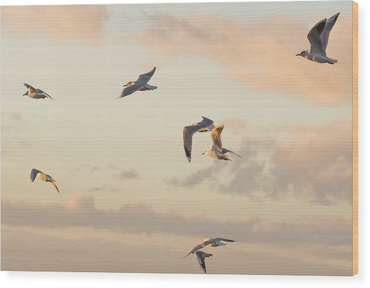 Evening Gulls Wood Print