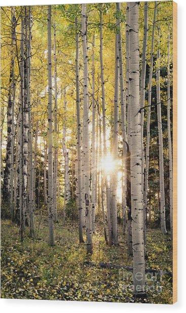 Evening In An Aspen Woods Vertical Wood Print