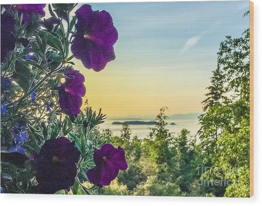 Evening Light On Orcas Island Wood Print