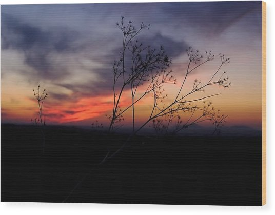 Evening Light Over Meadow Wood Print