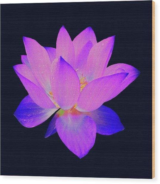 Evening Purple Lotus  Wood Print