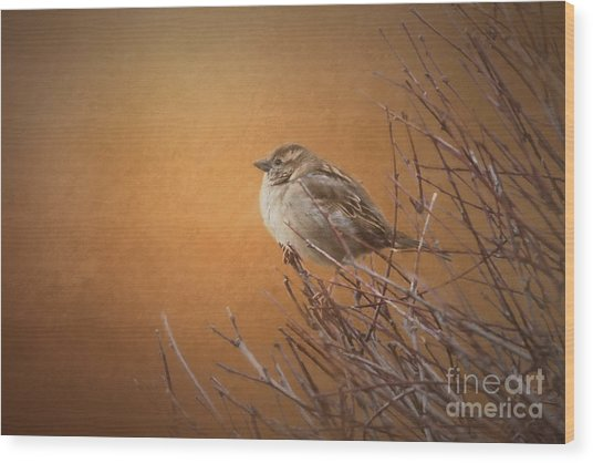Evening Sparrow Song Wood Print