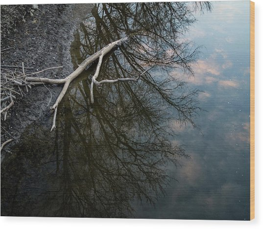 Wood Print featuring the photograph Evening Sunset Reflection by Whitney Leigh Carlson