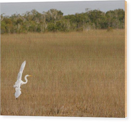 Everglades 429 Wood Print