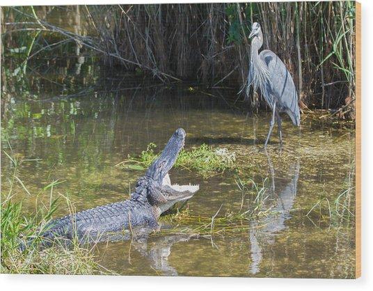 Everglades 431 Wood Print