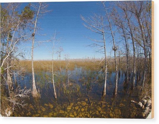 Everglades 85 Wood Print