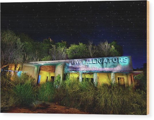 Everglades Gatorland Wood Print