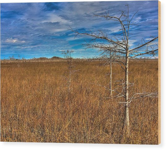Everglades Wood Print by William Wetmore