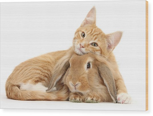 Everybody Needs A Bunny For A Pillow Wood Print
