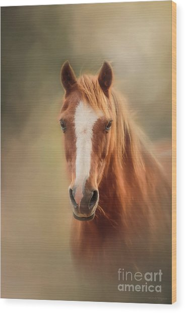 Everyone's Favourite Pony Wood Print