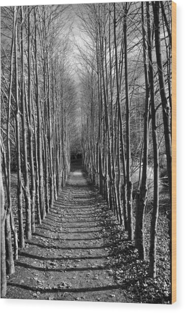 Everyone's Journey Is Individual Wood Print