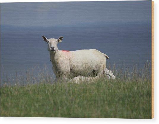 Ewe Guarding Lamb Wood Print